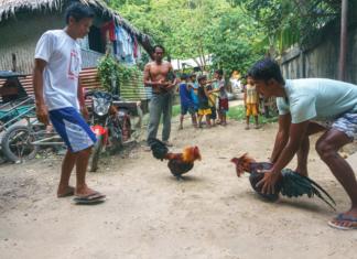 esabong, Philippines